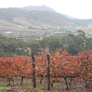 Cape Wine Country Tour